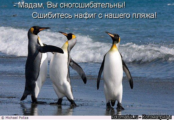 Котоматрица: - Мадам, Вы сногсшибательны!  Сшибитесь нафиг с нашего пляжа!