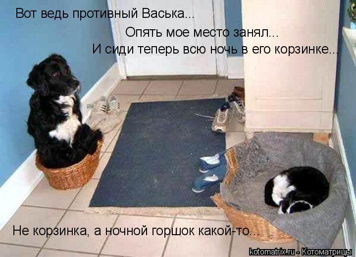 Котоматрица: Вот ведь противный Васька... Опять мое место занял... И сиди теперь всю ночь в его корзинке... Не корзинка, а ночной горшок какой-то...