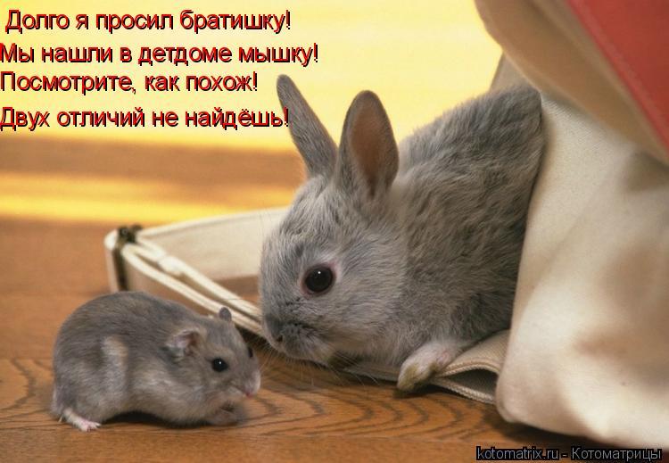 Котоматрица: Долго я просил братишку! Мы нашли в детдоме мышку! Посмотрите, как похож! Двух отличий не найдёшь!