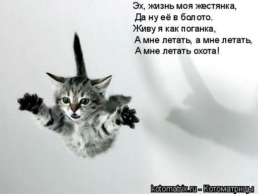 Котоматрица: А мне летать, а мне летать, Да ну её в болото. Эх, жизнь моя жестянка, Живу я как поганка, А мне летать охота!