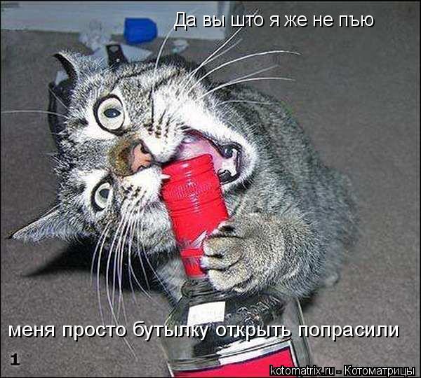 Котоматрица: Да вы што я же не пъю меня просто бутылку открыть попрасили