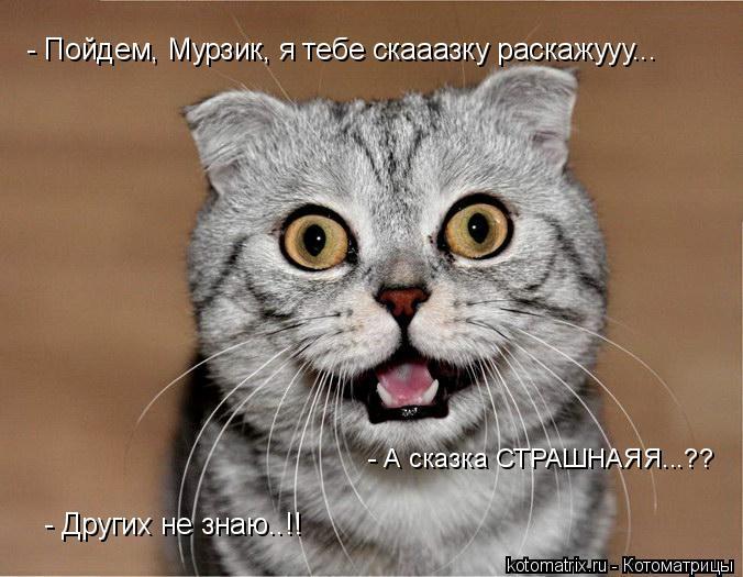 Котоматрица: - Пойдем, Мурзик, я тебе скааазку раскажууу... - А сказка СТРАШНАЯЯ...?? - Других не знаю..!!