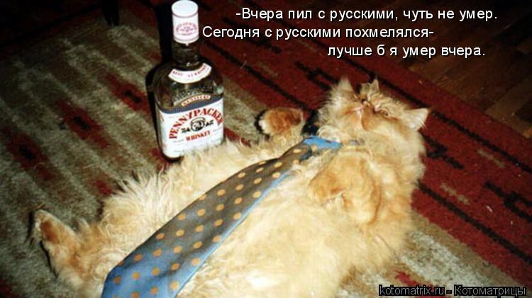 Котоматрица: -Вчера пил с русскими, чуть не умер. Сегодня с русскими похмелялся- лучше б я умер вчера.