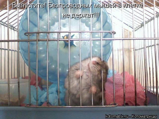 Котоматрица: Выпустите! Безпроводных мышей в клетке не держат!!!