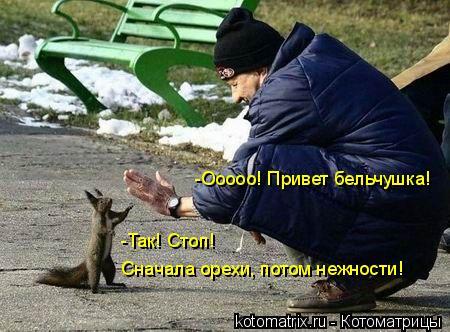 Котоматрица: -Ооооо! Привет бельчушка! -Так! Стоп!  Сначала орехи, потом нежности!