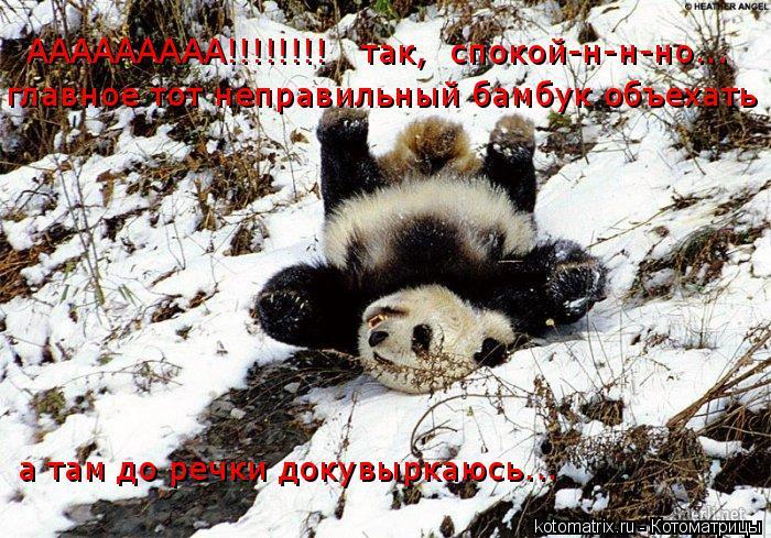 Котоматрица: ААААААААА!!!!!!!!   так,  спокой-н-н-но...  главное тот неправильный бамбук объехать а там до речки докувыркаюсь...