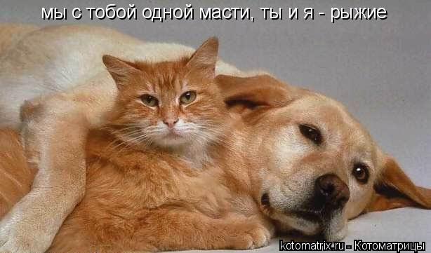 Котоматрица: мы с тобой одной масти, ты и я - рыжие