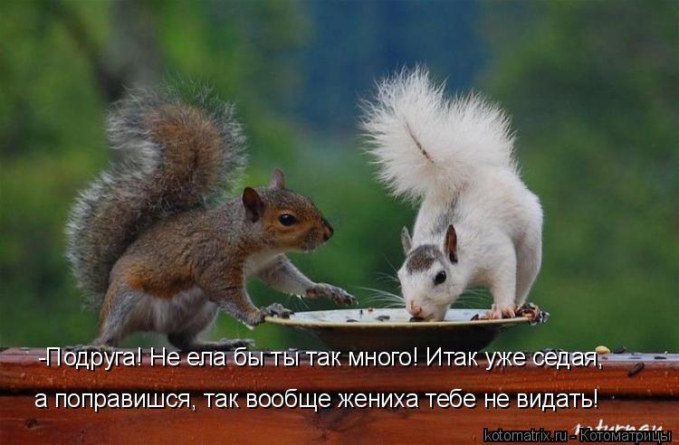 Котоматрица: -Подруга! Не ела бы ты так много! Итак уже седая,  а поправишся, так вообще жениха тебе не видать!