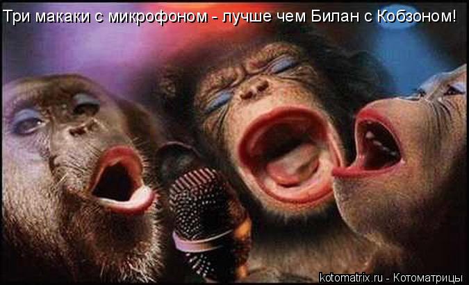 Котоматрица: Три макаки с микрофоном - лучше чем Билан с Кобзоном!