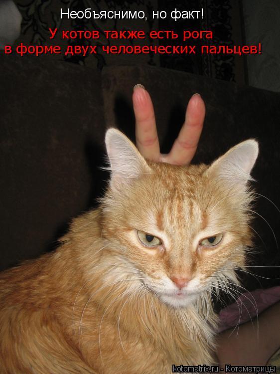 Котоматрица: Необъяснимо, но факт! У котов также есть рога в форме двух человеческих пальцев!