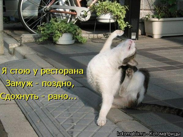 Котоматрица: Я стою у ресторана Замуж - поздно, Сдохнуть - рано...