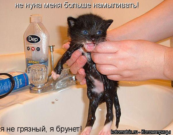 Котоматрица: не нуна меня больше намыливать! я не грязный, я брунет!