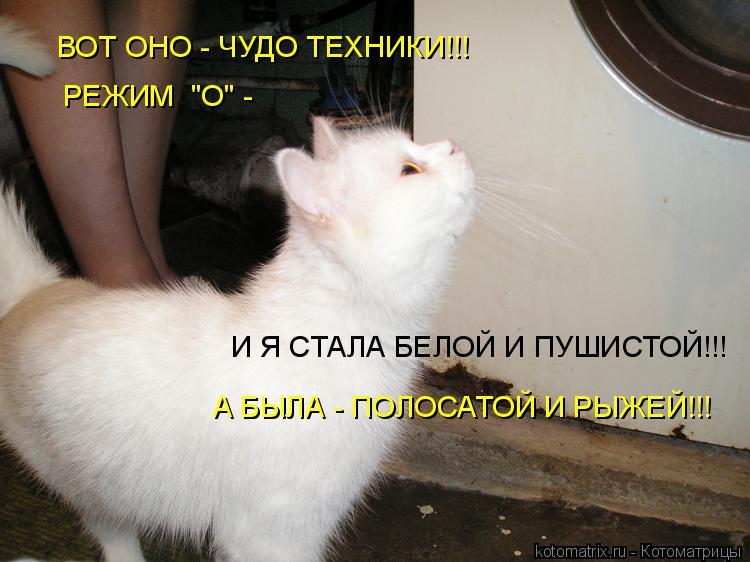 """Котоматрица: ВОТ ОНО - ЧУДО ТЕХНИКИ!!! РЕЖИМ  """"О"""" - И Я СТАЛА БЕЛОЙ И ПУШИСТОЙ!!! А БЫЛА - ПОЛОСАТОЙ И РЫЖЕЙ!!!"""