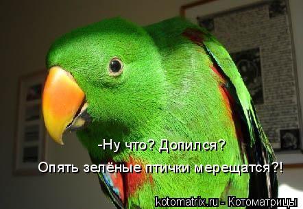 Котоматрица: -Ну что? Допился?  Опять зелёные птички мерещатся?!