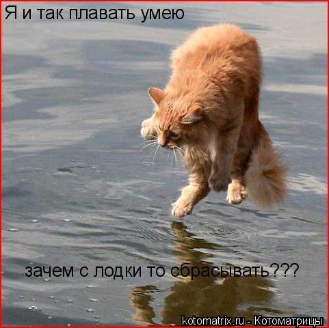 Котоматрица: Я и так плавать умею зачем с лодки то сбрасывать???