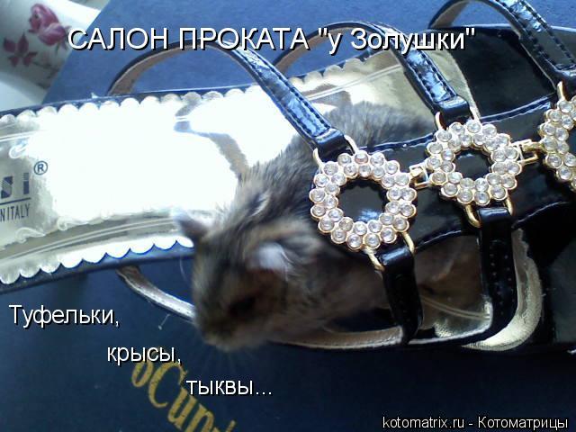 "Котоматрица: Туфельки, крысы, тыквы... САЛОН ПРОКАТА ""у Золушки"""
