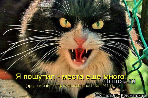 Котоматрица: Я пошутил - места еще много! (продолжение к http://kotomatrix.ru/show/47410/)