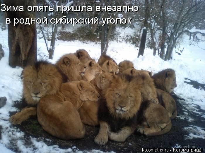 Котоматрица: в родной сибирский уголок Зима опять пришла внезапно