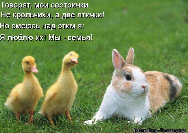 Котоматрица: Говорят, мои сестрички Не крольчихи, а две птички! Но смеюсь над этим я: Я люблю их! Мы - семья!