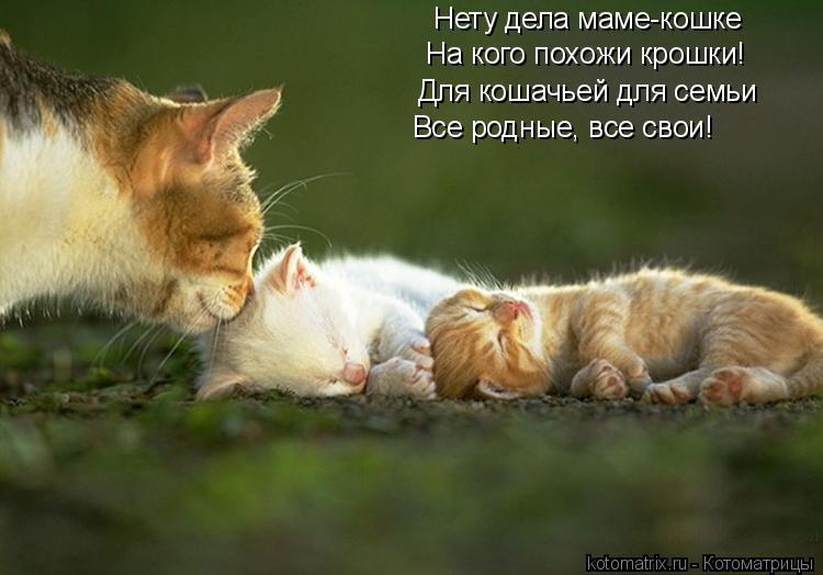 Котоматрица: Нету дела маме-кошке На кого похожи крошки! Для кошачьей для семьи Все родные, все свои!