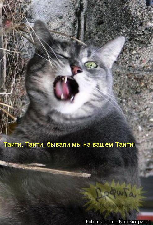 Котоматрица: Таити, Таити, бывали мы на вашем Таити!