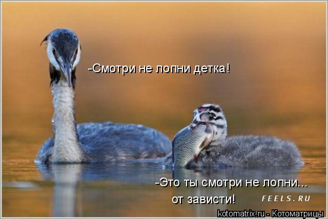 Котоматрица: -Смотри не лопни детка! -Это ты смотри не лопни...  от зависти!
