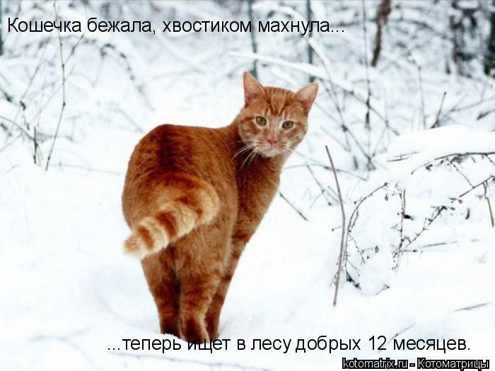 Котоматрица: Кошечка бежала, хвостиком махнула... ...теперь ищет в лесу добрых 12 месяцев.