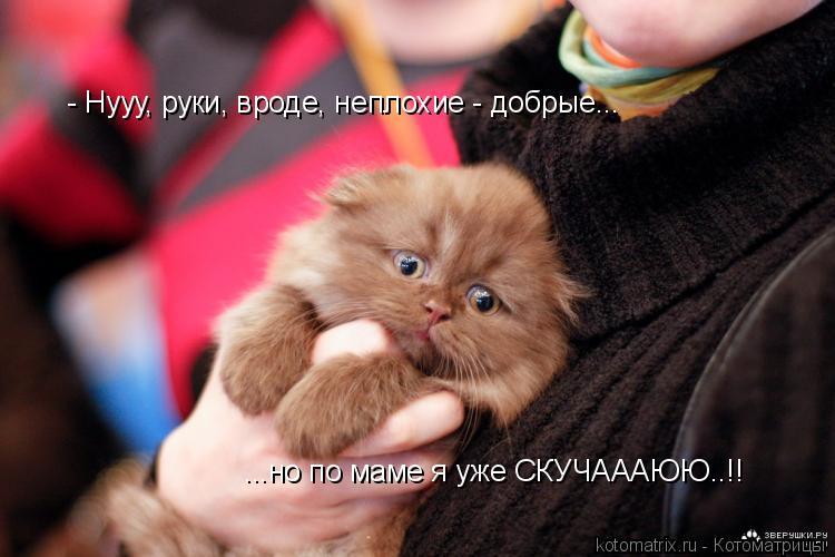 Котоматрица: - Нууу, руки, вроде, неплохие - добрые... ...но по маме я уже СКУЧАААЮЮ..!!