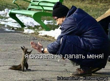 Котоматрица: я сказала не лапать меня!