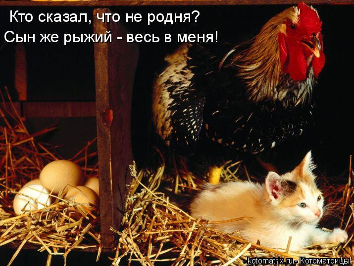 Котоматрица: Кто сказал, что не родня? Сын же рыжий - весь в меня!