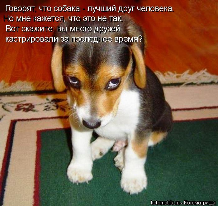 Котоматрица: Говорят, что собака - лучший друг человека. Но мне кажется, что это не так. Вот скажите: вы много друзей  кастрировали за последнее время?