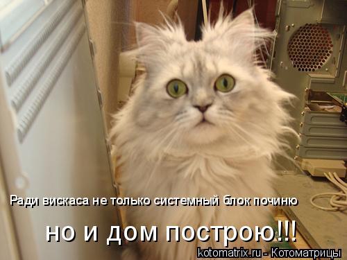 Котоматрица: Ради вискаса не только системный блок починю но и дом построю!!!