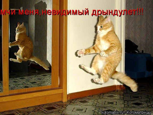 Котоматрица: мчи меня,невидимый дрындулет!!!