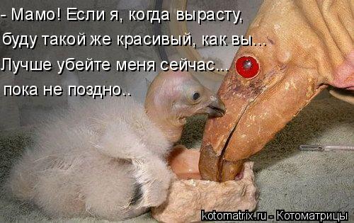 Котоматрица: - Мамо! Если я, когда вырасту, буду такой же красивый, как вы... Лучше убейте меня сейчас... пока не поздно..