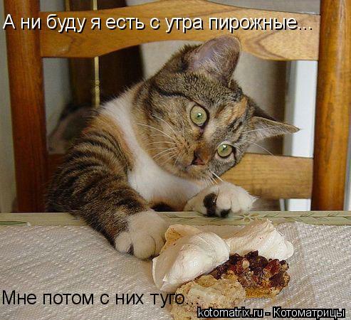 Котоматрица: А ни буду я есть с утра пирожные... Мне потом с них туго...