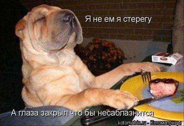 Котоматрица: Я не ем я стерегу А глаза закрыл что бы несаблазнится