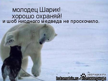 Котоматрица: молодец Шарик! хорошо охраняй!  и шоб ниодного медведа не проскочило.