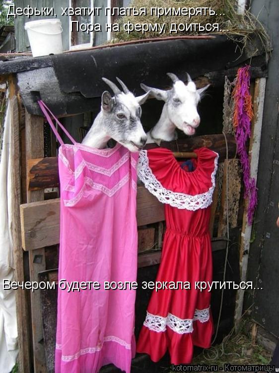 Котоматрица: Дефьки, хватит платья примерять... Пора на ферму, доиться... Вечером будете возле зеркала крутиться...