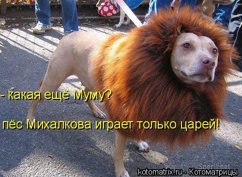 Котоматрица: пёс Михалкова играет только царей! - какая ещё Муму?