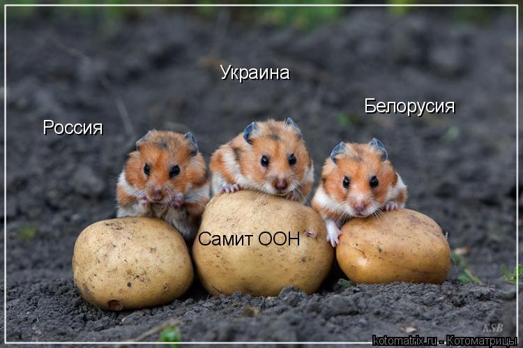 Котоматрица: Россия Украина Белорусия Самит ООН