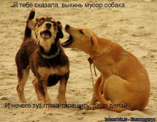 Котоматрица: Я тебе сказала, выкинь мусор собака..... И нечего тут глаза таращить, дело делай!!