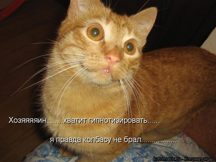 Котоматрица: Хозяяяяин........хватит гипнотизировать...... я правда колбасу не брал.................