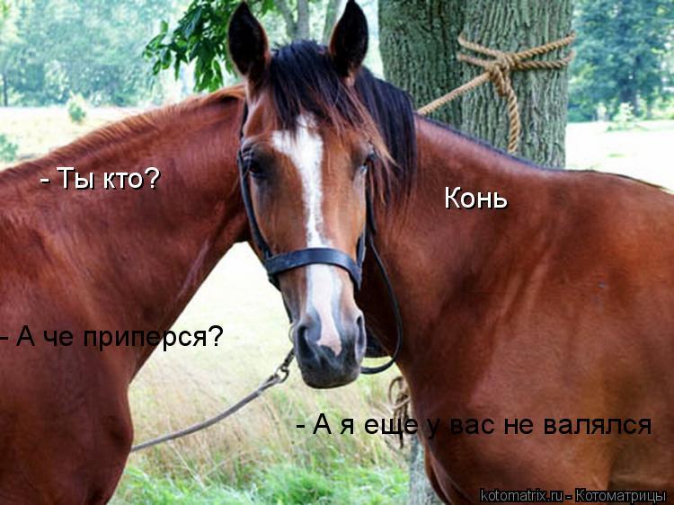 Котоматрица: - Ты кто?  Конь - А че приперся? - А я еще у вас не валялся