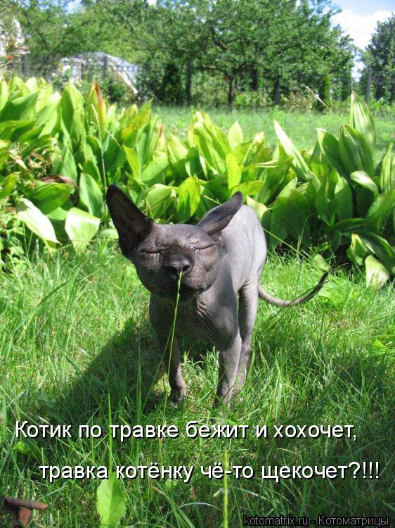 Котоматрица: Котик по травке бежит и хохочет, травка котёнку чё-то щекочет?!!!