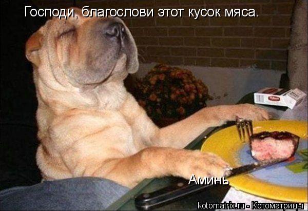 Котоматрица: Господи, благослови этот кусок мяса. Аминь