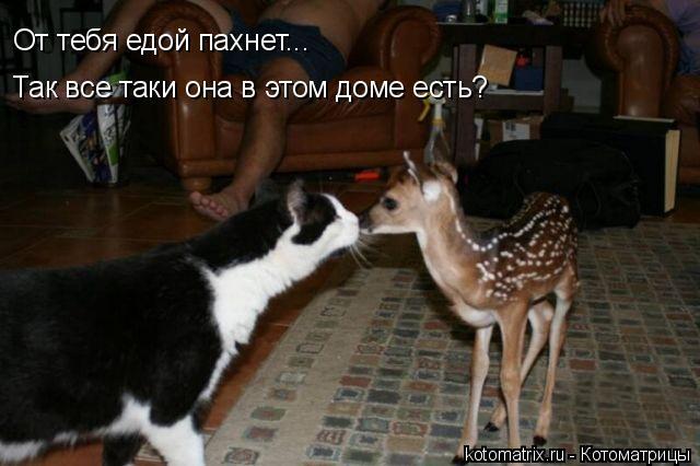 Котоматрица: От тебя едой пахнет... Так все таки она в этом доме есть?