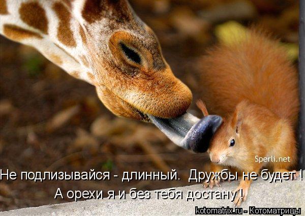 Котоматрица: Не подлизывайся - длинный.  Дружбы не будет ! А орехи я и без тебя достану !