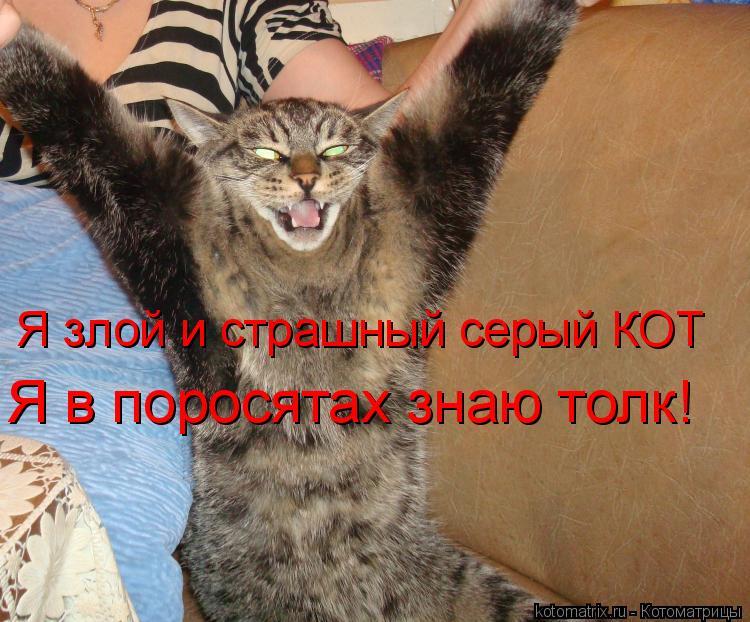 Котоматрица: Я злой и страшный серый КОТ Я в поросятах знаю толк!