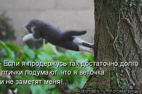 Котоматрица: - Если я продержусь так достаточно долго птички подумают, что я веточка и не заметят меня!..