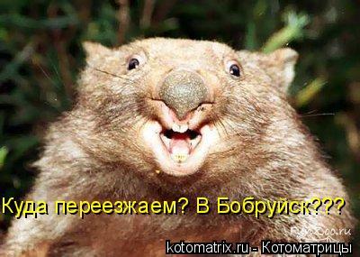 Котоматрица: Куда переезжаем? В Бобруйск???
